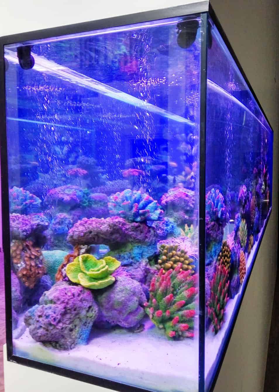 aquarium26