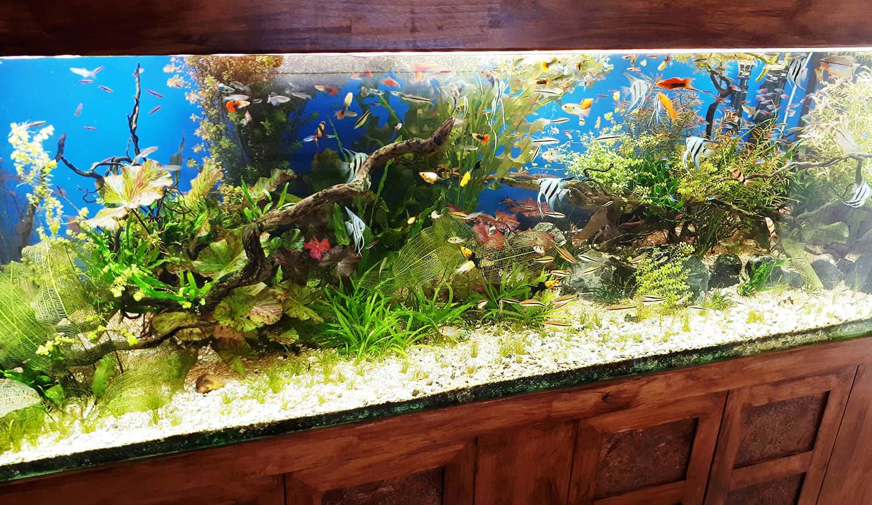 aquarium36
