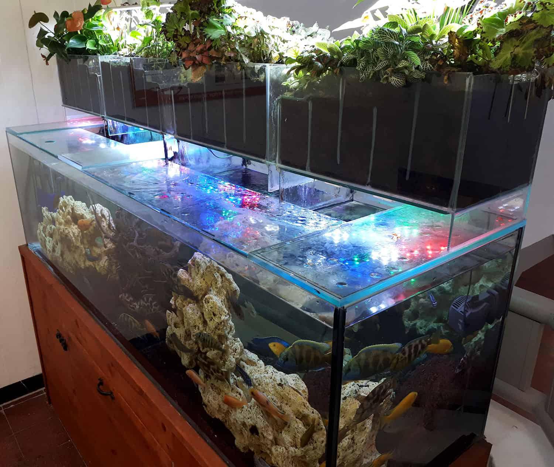 aquarium37