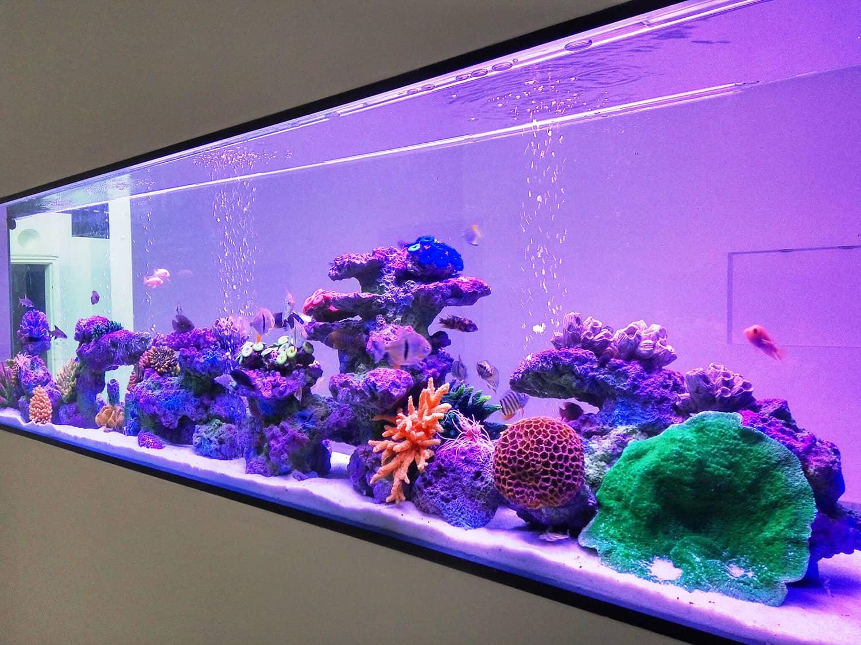 aquarium46