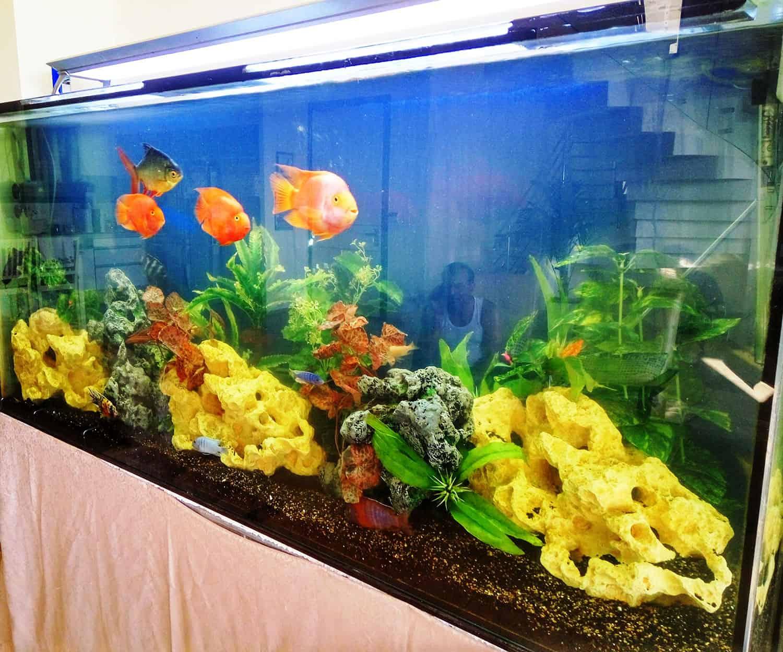 aquarium49