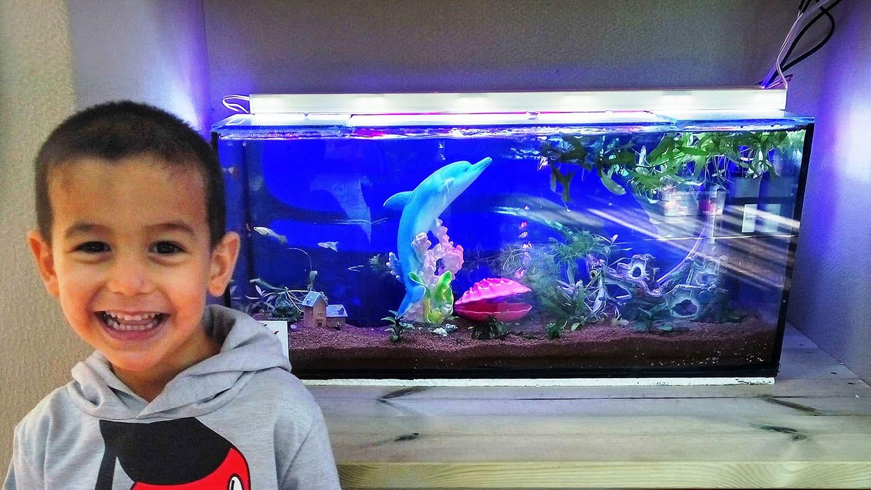 aquarium50