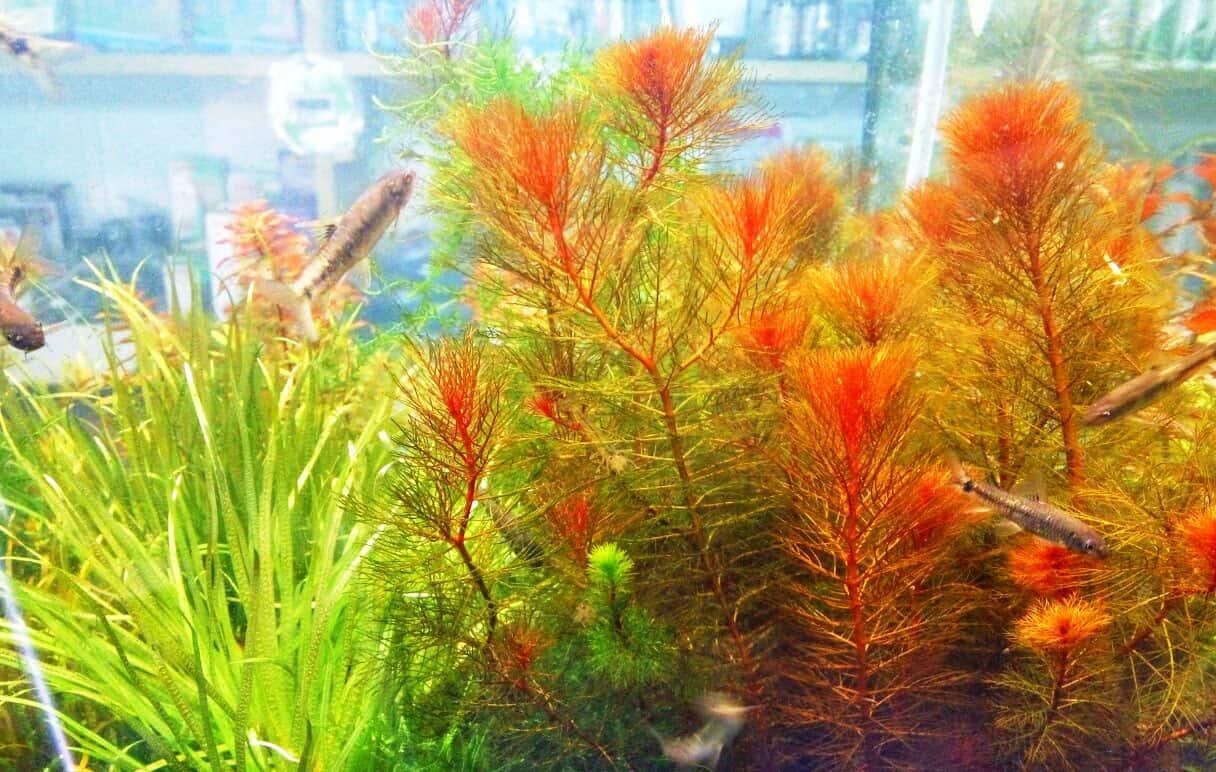 aquarium52