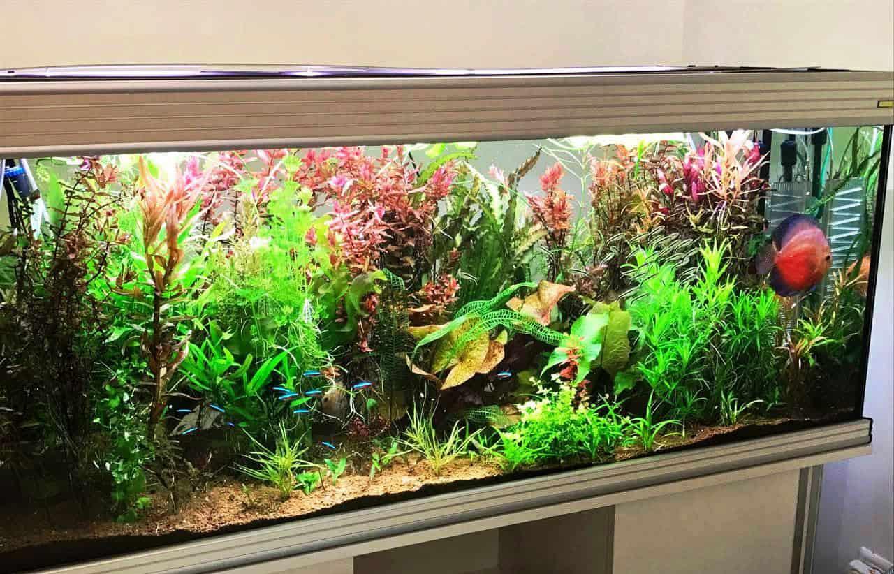 aquarium54