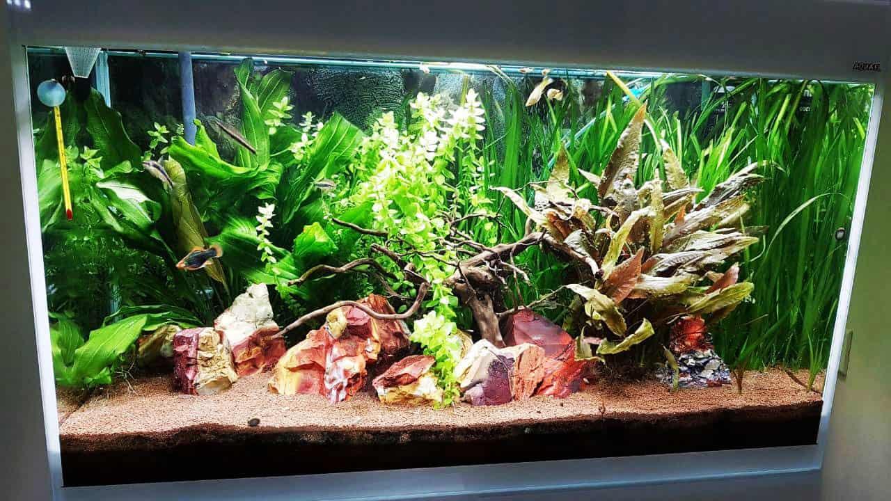 aquarium55