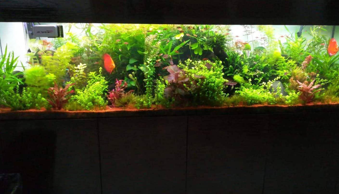 aquarium57