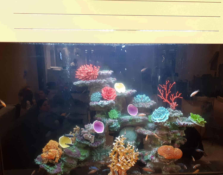 aquariumnew1