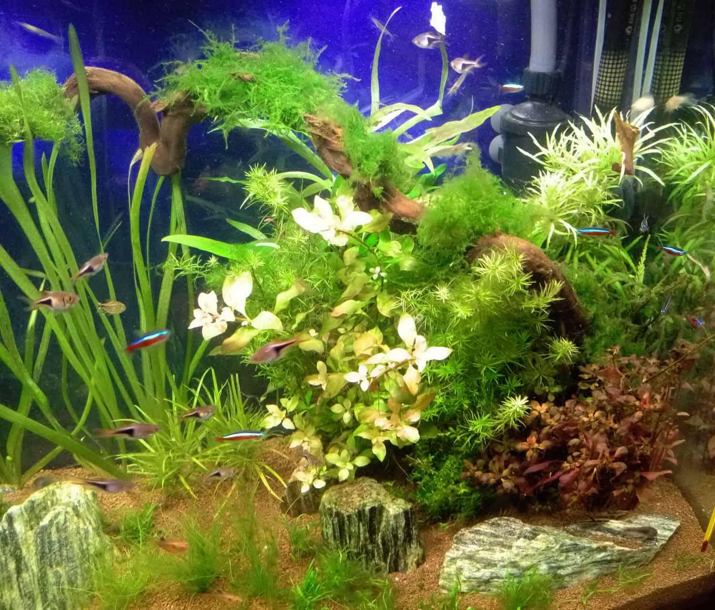 aquariumnew10