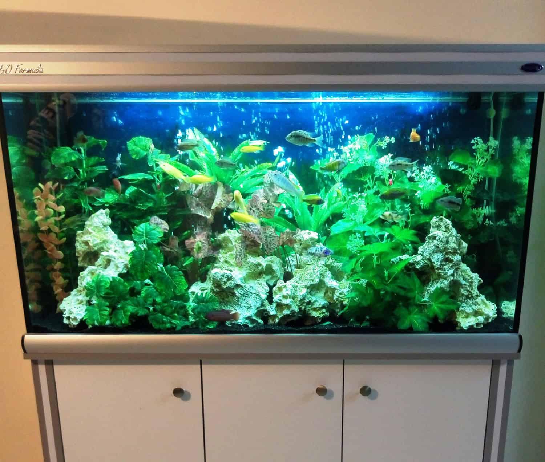 aquariumnew11