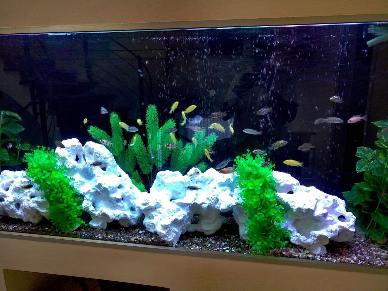 aquariumnew12