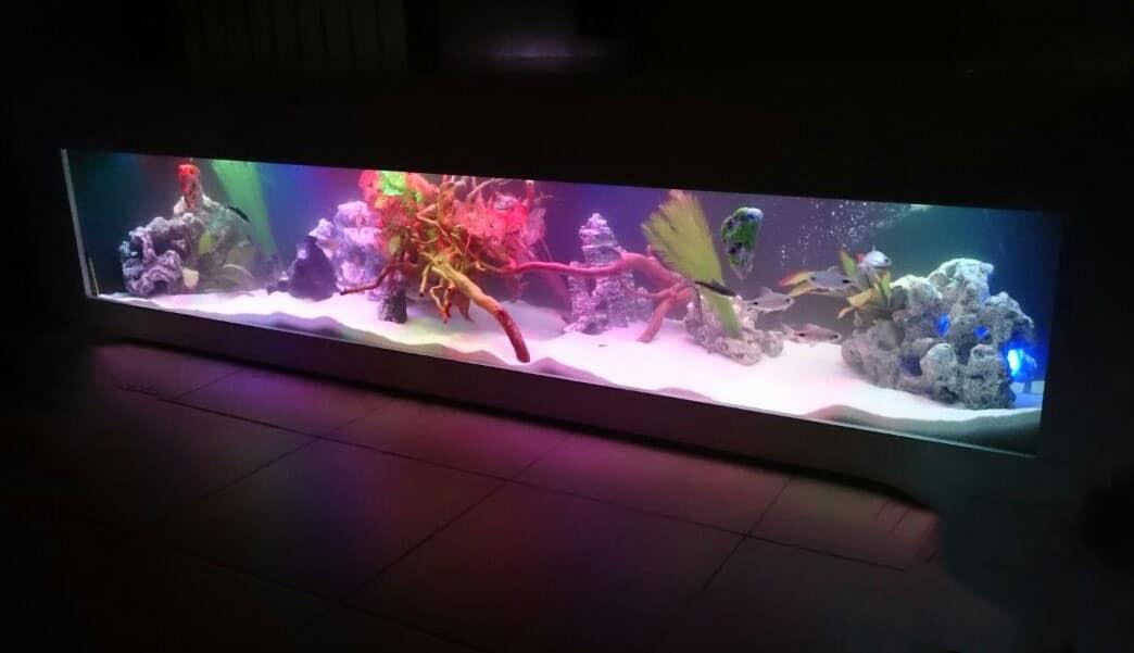 aquariumnew13
