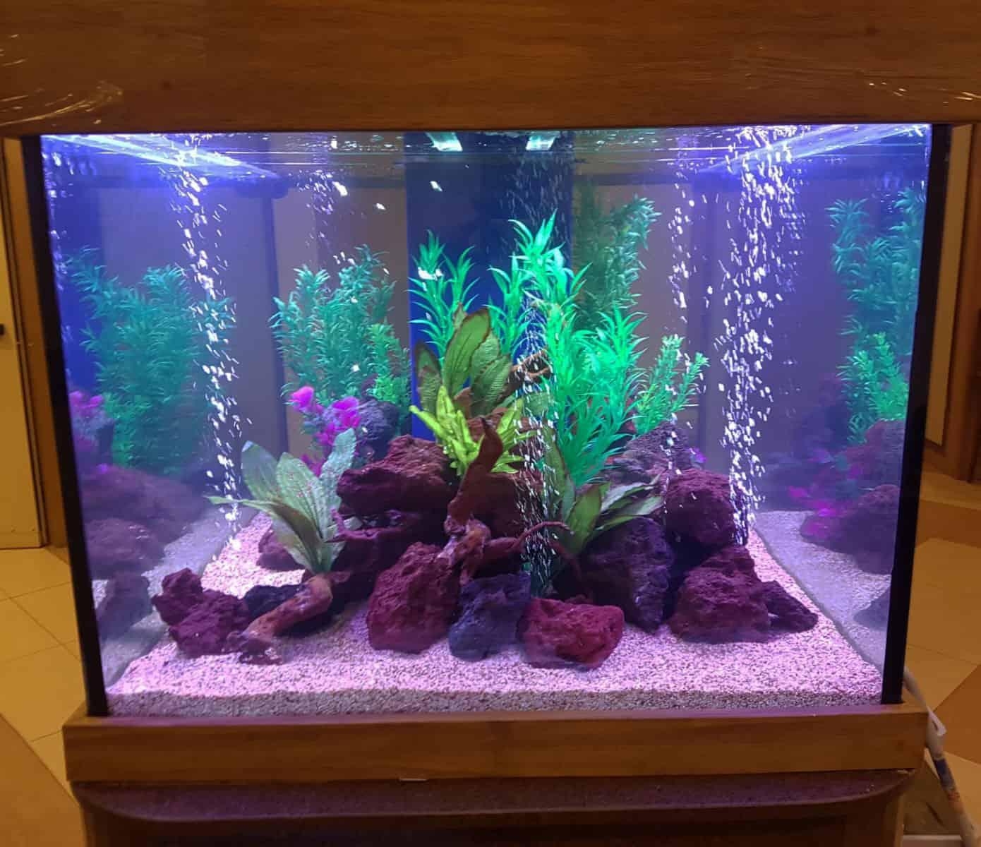 aquariumnew14