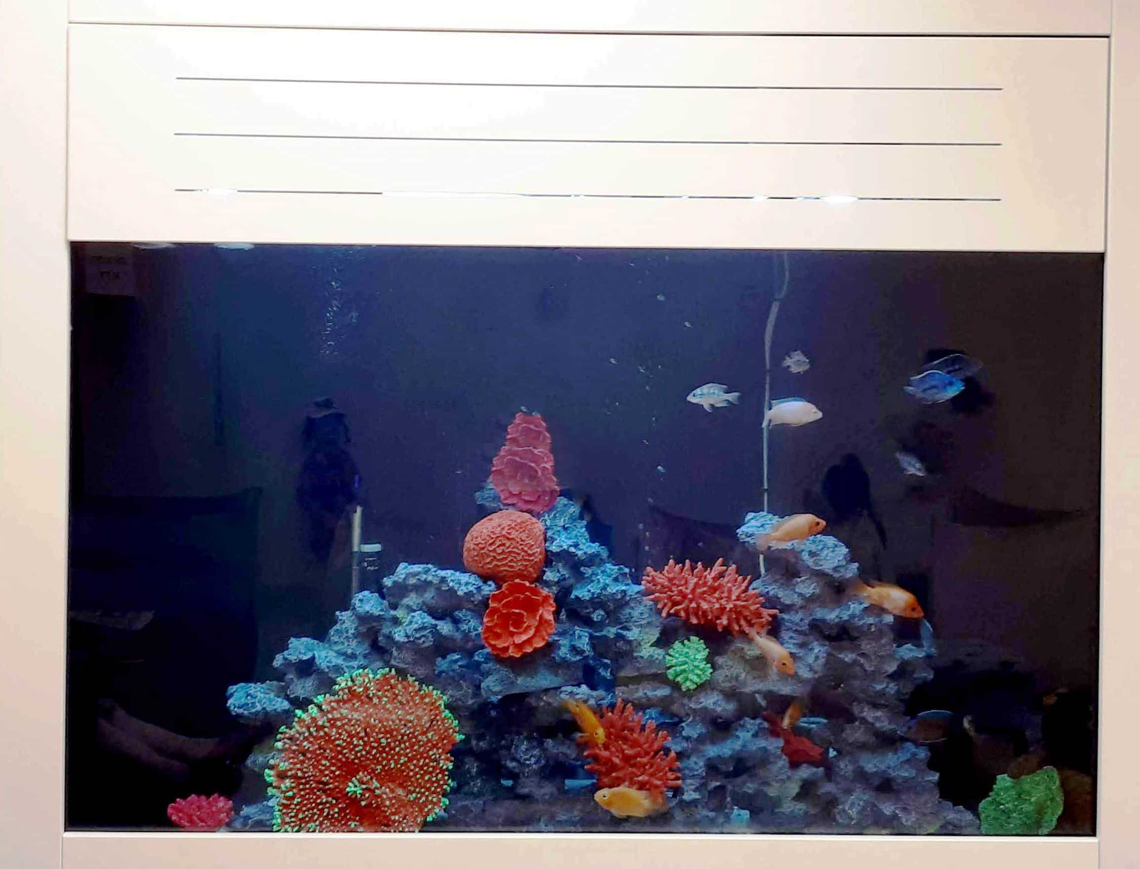 aquariumnew2