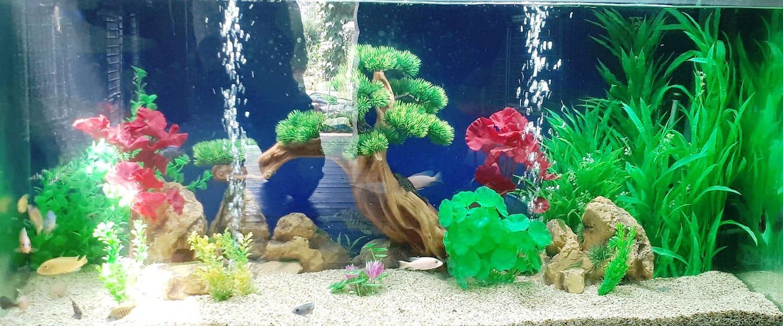 aquariumnew3