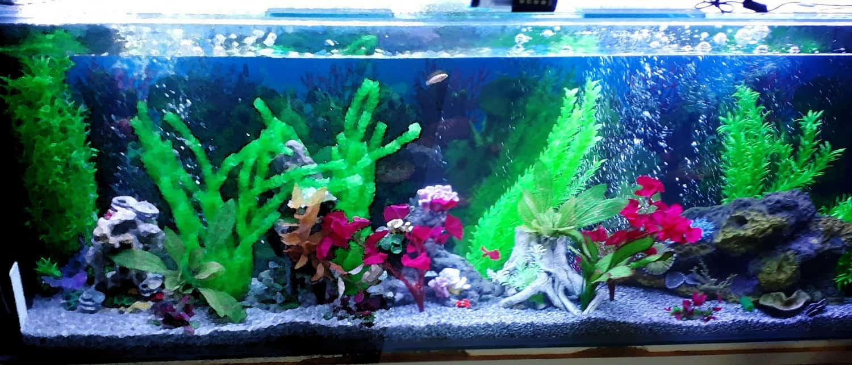 aquariumnew4