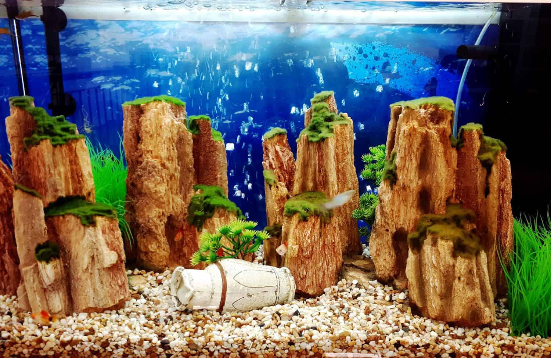 aquariumnew6