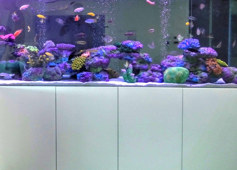 aquariumnew7