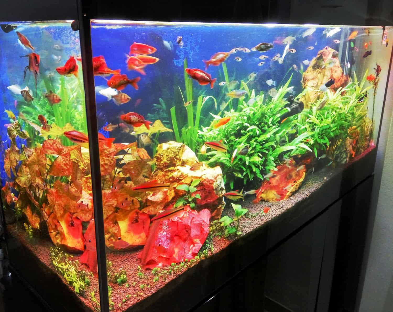 aquariumnew8