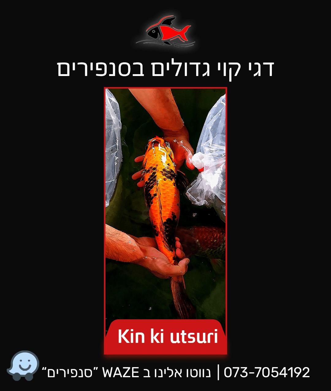 kin-ki-utsuri