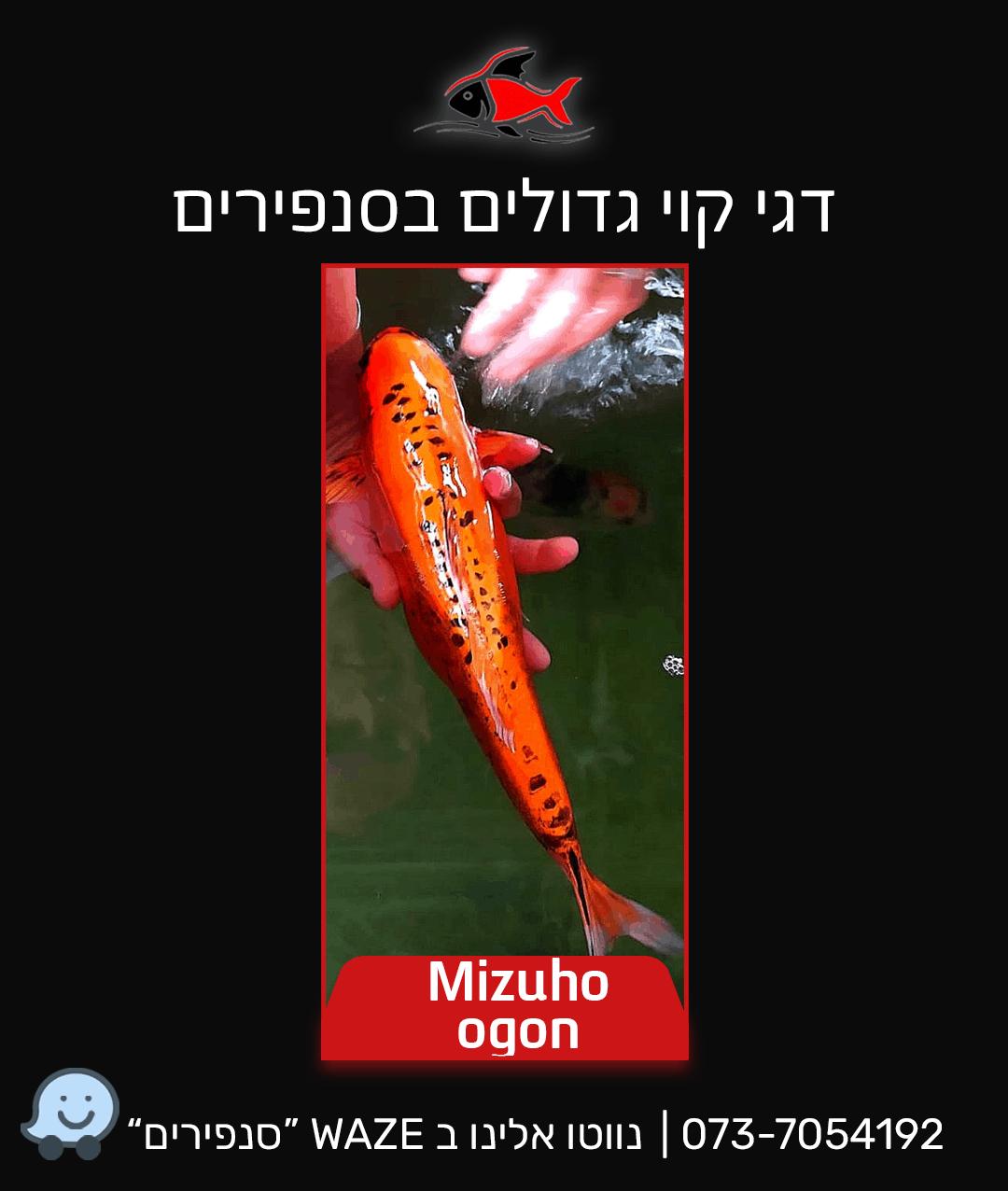 mizuho-ogon