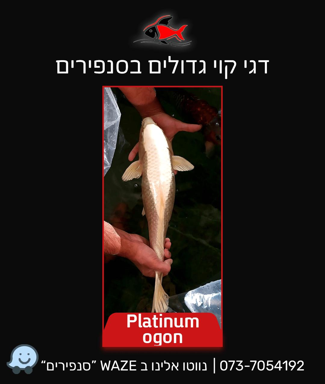 platinum-ogon