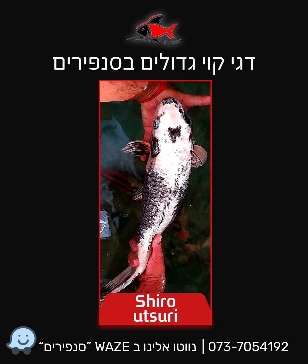 shiro-utsuri
