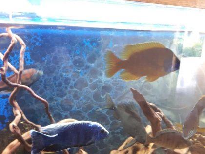 תאורה מתקדמת להבלטת צבעי הדגים
