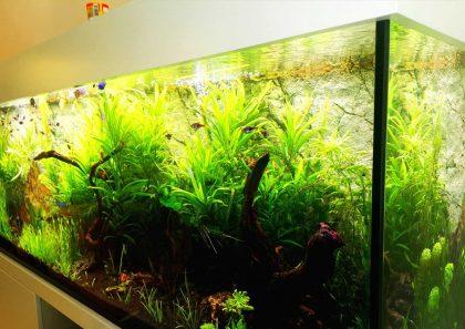 מאמר ראשון בסדרה: תאורה באקווריום צמחיה- מבוא
