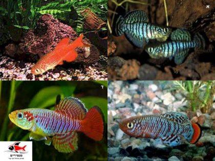 מאמר ראשון: משפחת דגי הקילי – 1270 סוגים שלא הכרת